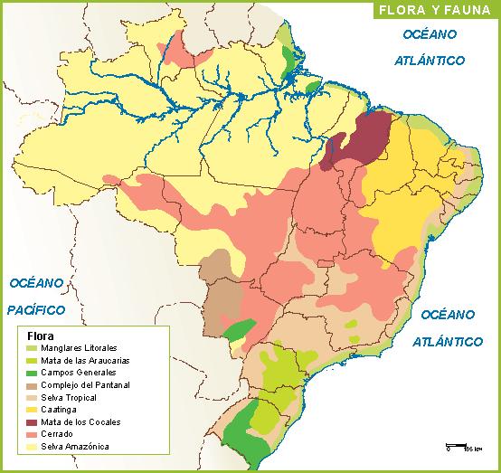 Brasil mapa flora fauna